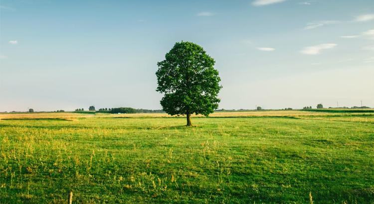 drzewo-dzialka